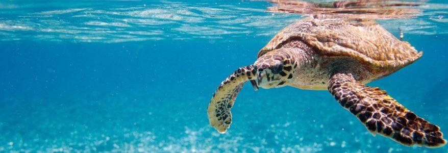 วิธีป้องกันสัตว์น้ำไม่ให้สูญพันธุ์