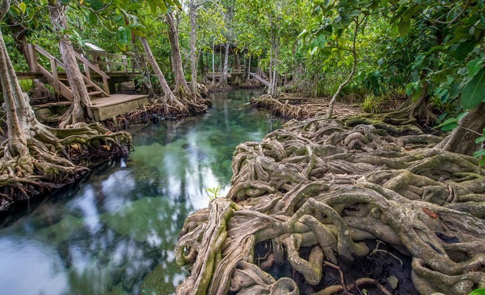 Estuarine ecosystems