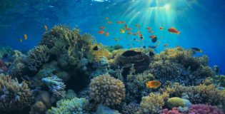 Marine-natural-resources-news-site