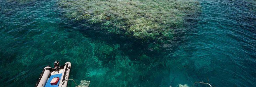 สร้างปะการังเพื่อสิ่งแวดล้อมในท้องทะเล
