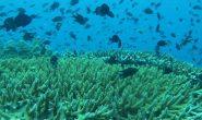 โครงการปะการังเทียม