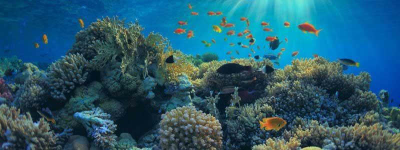 การอนุรักษ์ทรัพยากรธรรมชาติทางทะเลควรทำอย่างไร