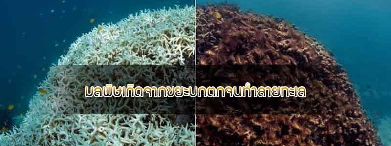 สาเหตุที่ทำให้ปะการังตายมีอะไรบ้าง